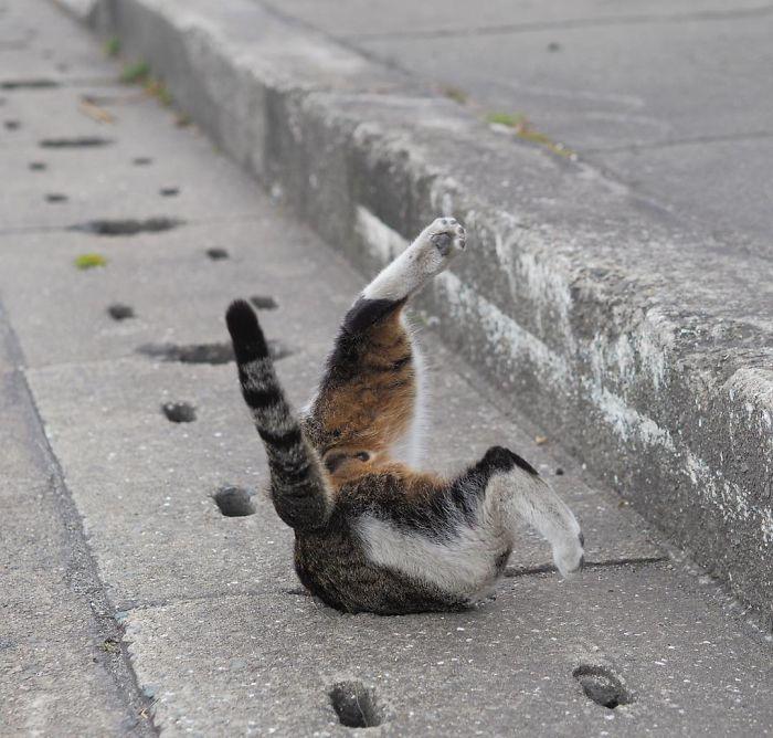 Cat Stuck In Pipe Funny