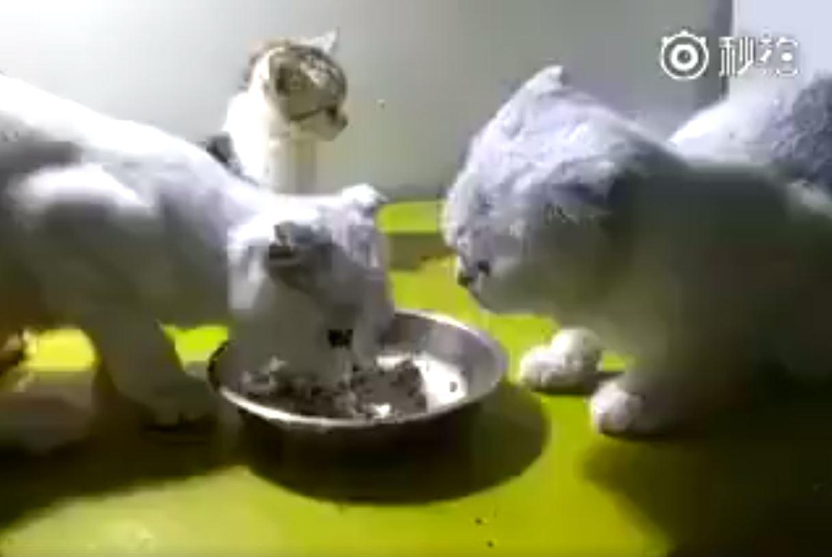 無辜的小貓1