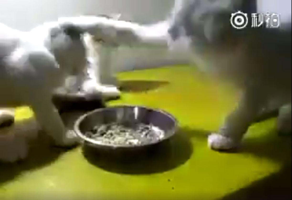 無辜的小貓4