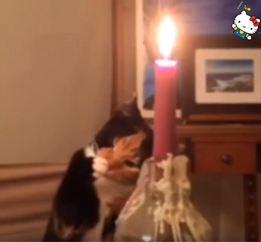 貓咪玩火2