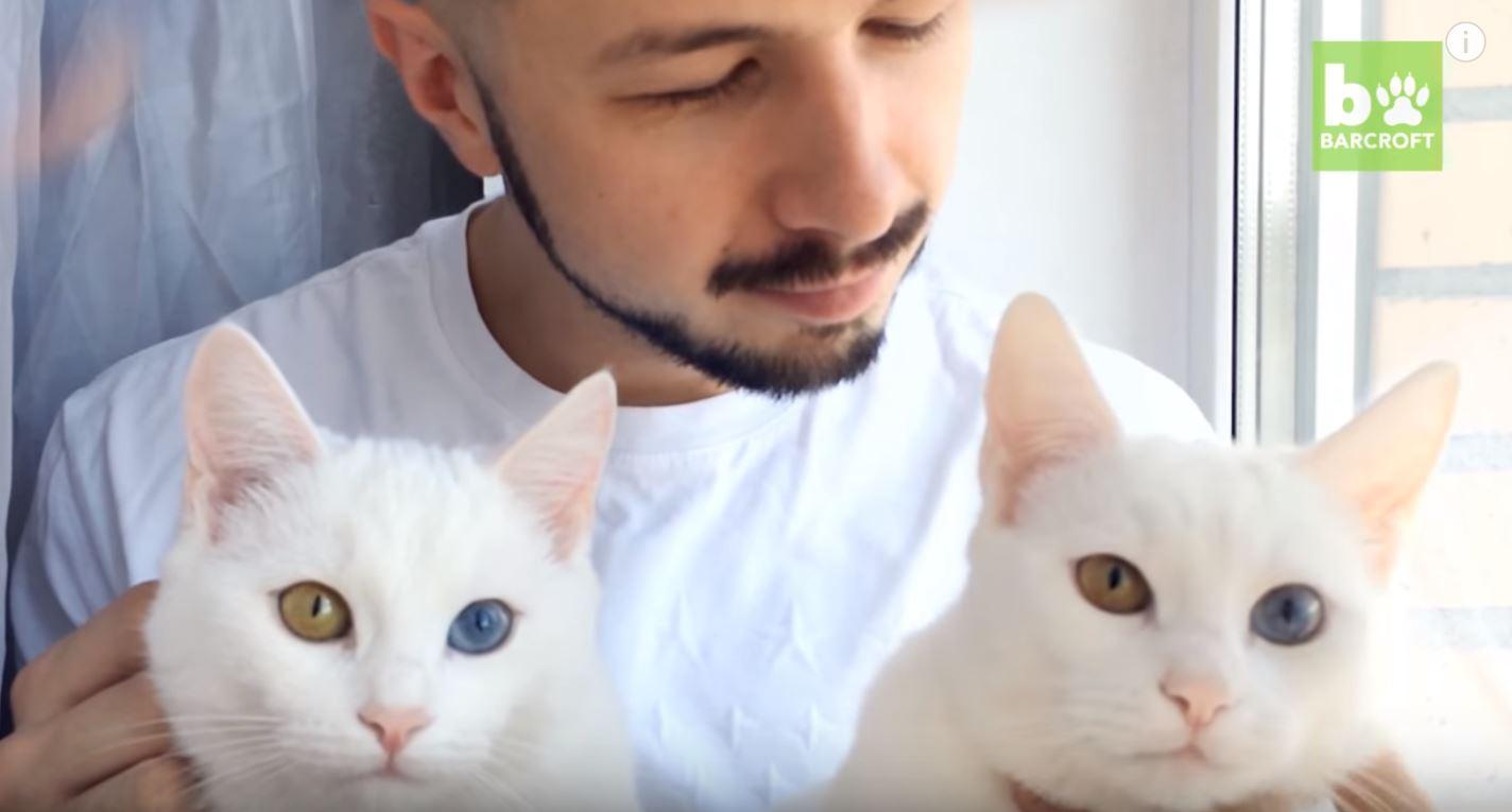 異色瞳貓1