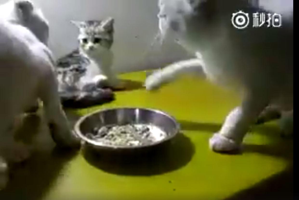 無辜的小貓3