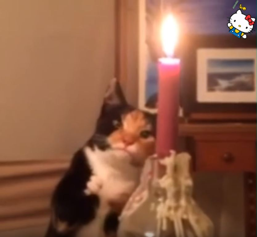 貓咪玩火3