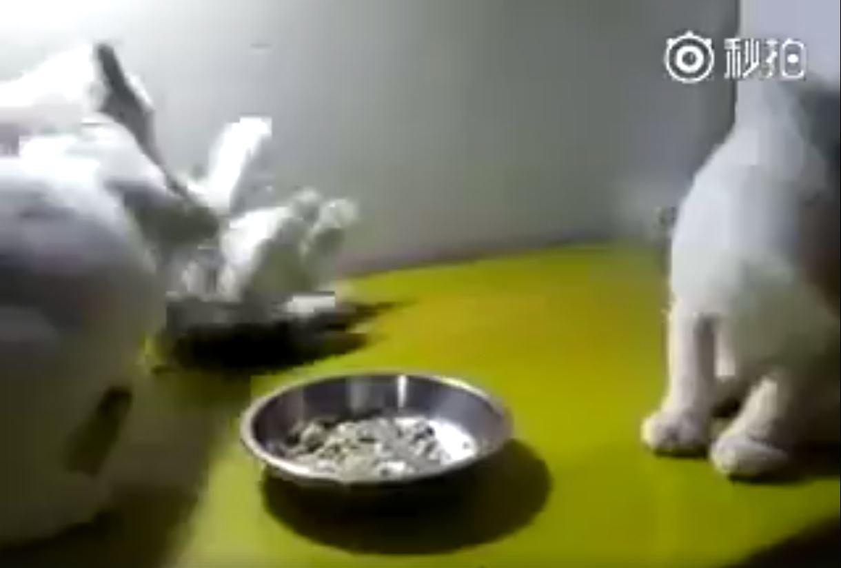 無辜的小貓2