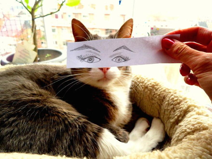 動漫貓15