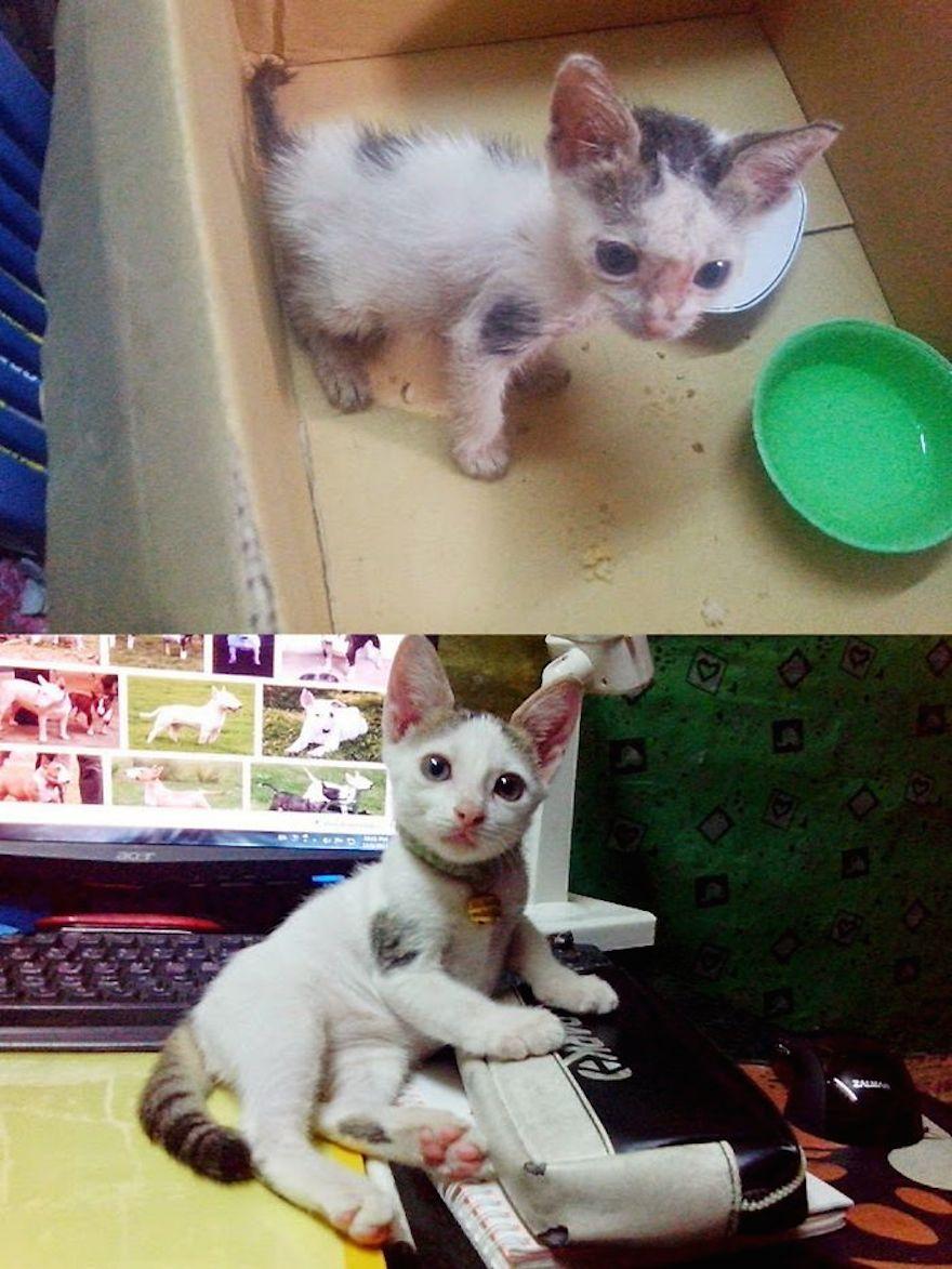 貓的重生照18