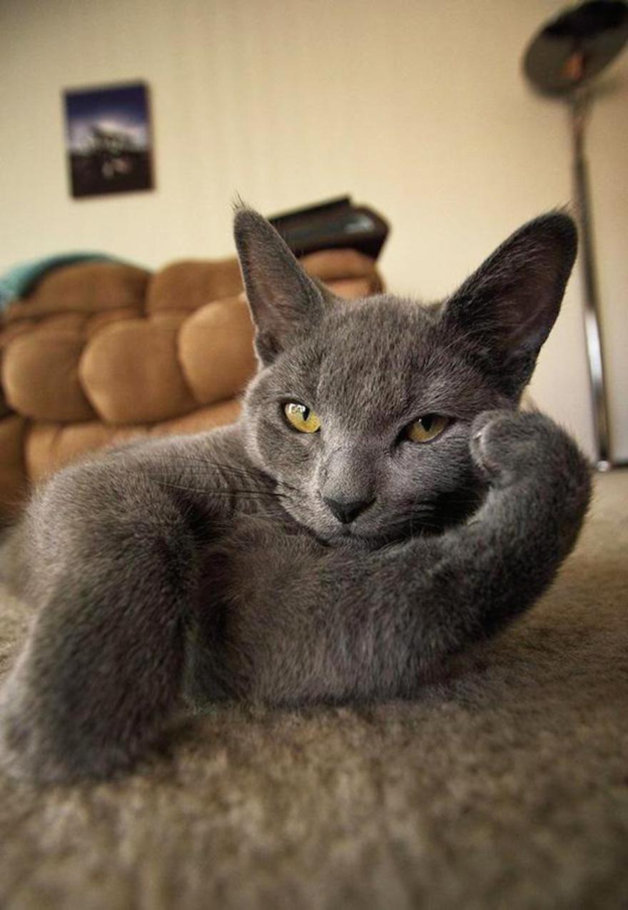 躺在毛毯的貓咪