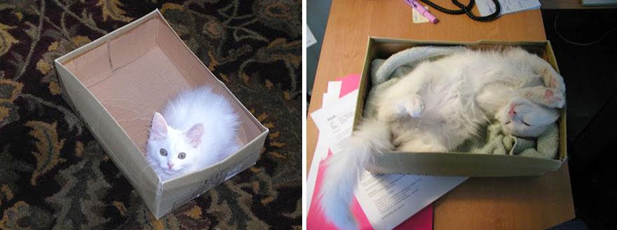 貓咪成長照4