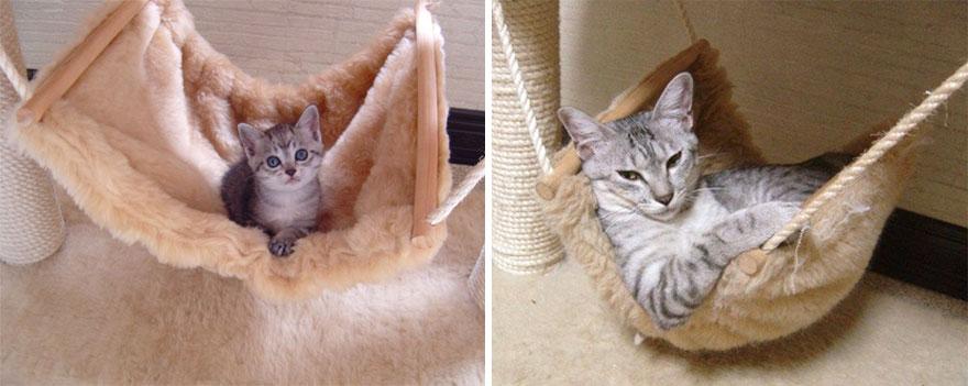 貓咪成長照17