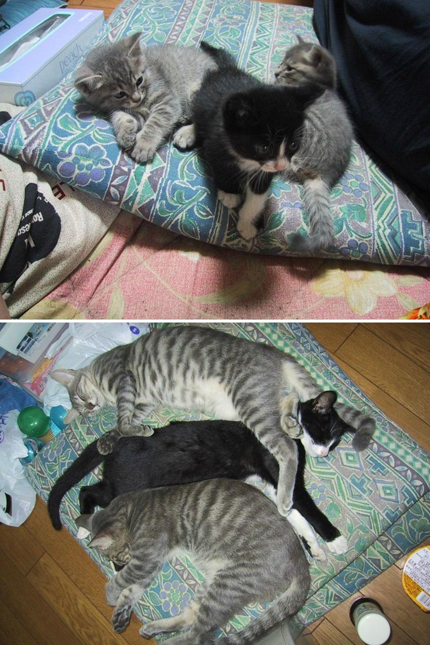 貓咪成長照16