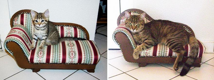 貓咪成長照15