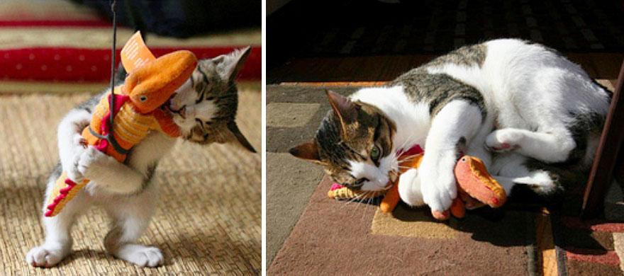 貓咪成長照9