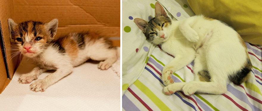 貓咪成長照7