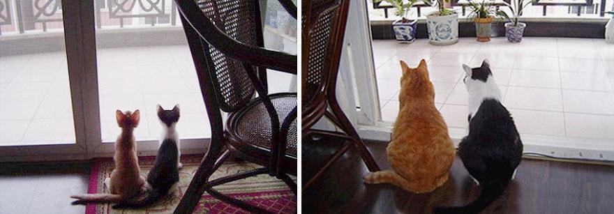 貓咪成長照6