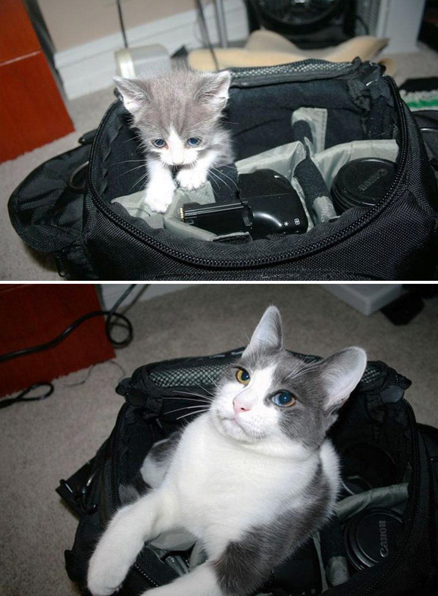 貓咪成長照20