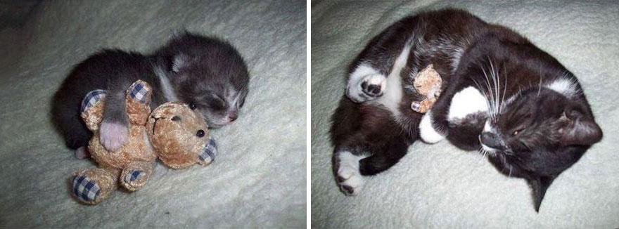 貓咪成長照19