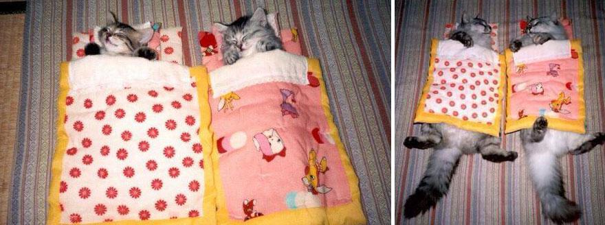貓咪成長照1