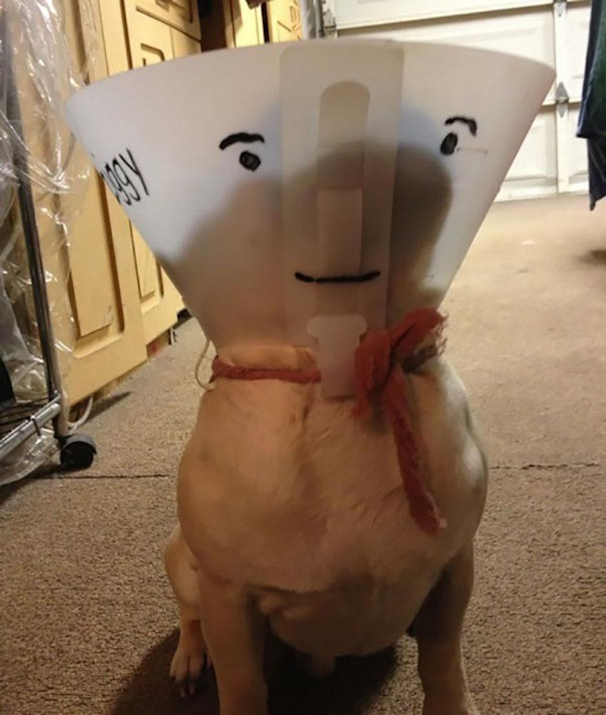 寵物頭罩3