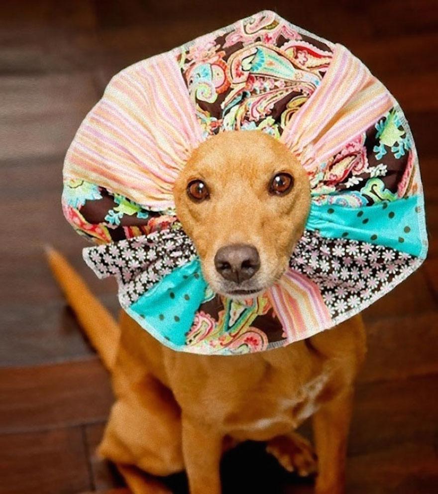 寵物頭罩2