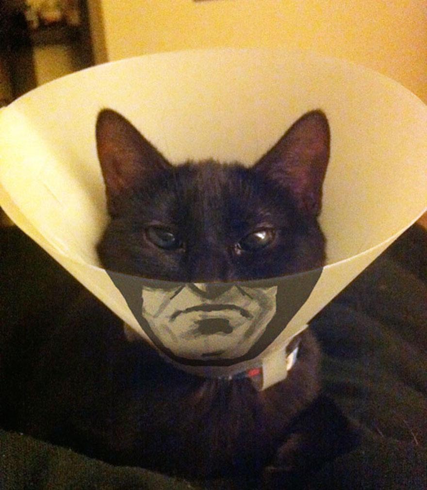 寵物頭罩18