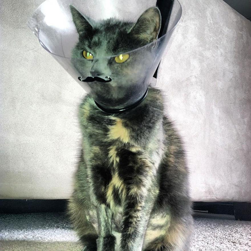 寵物頭罩12
