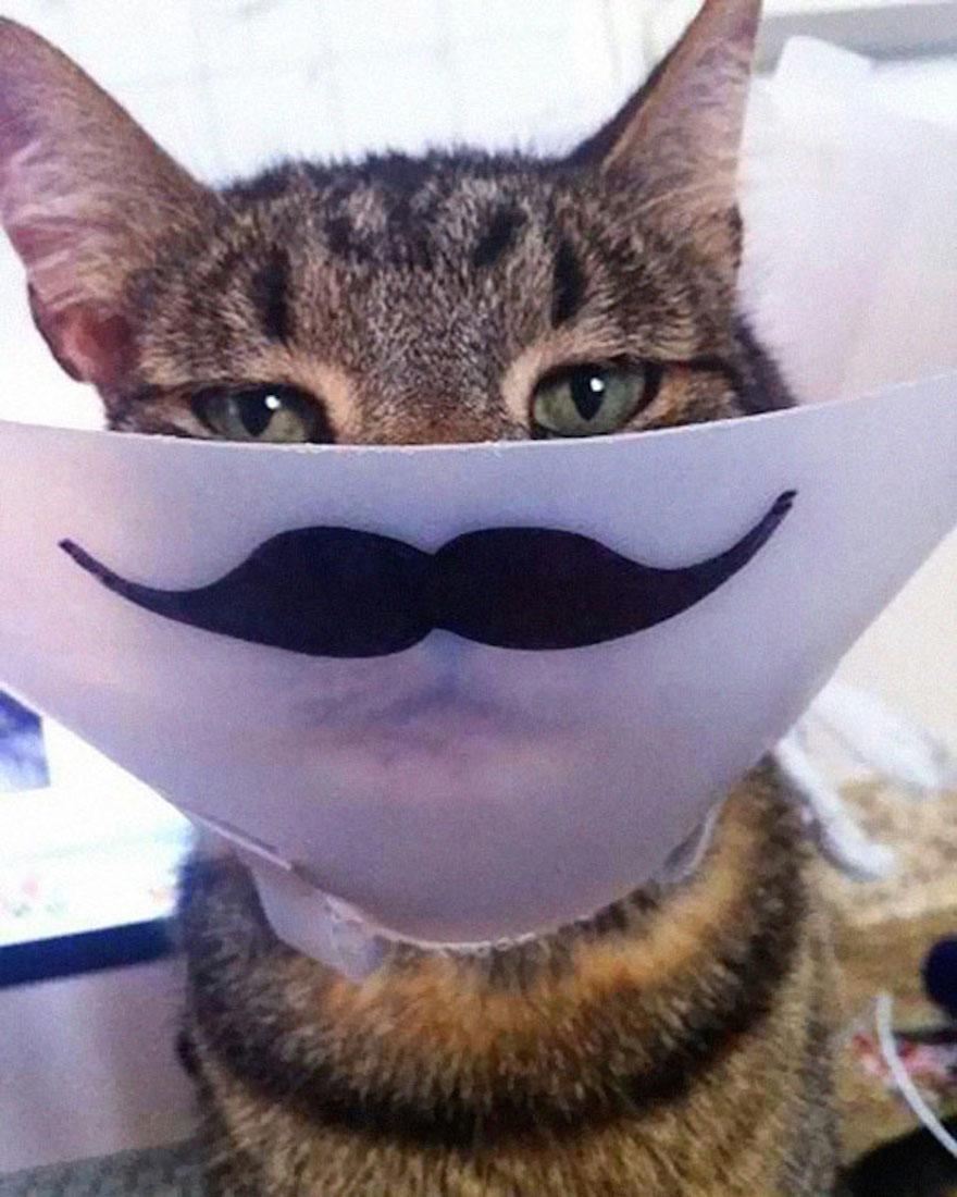 寵物頭罩13