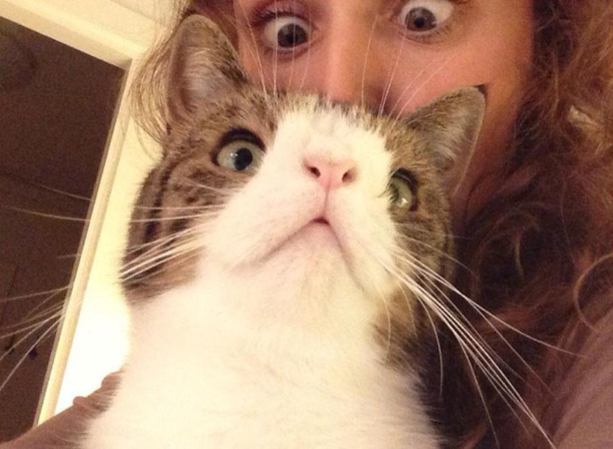 天生無鼻樑的貓6