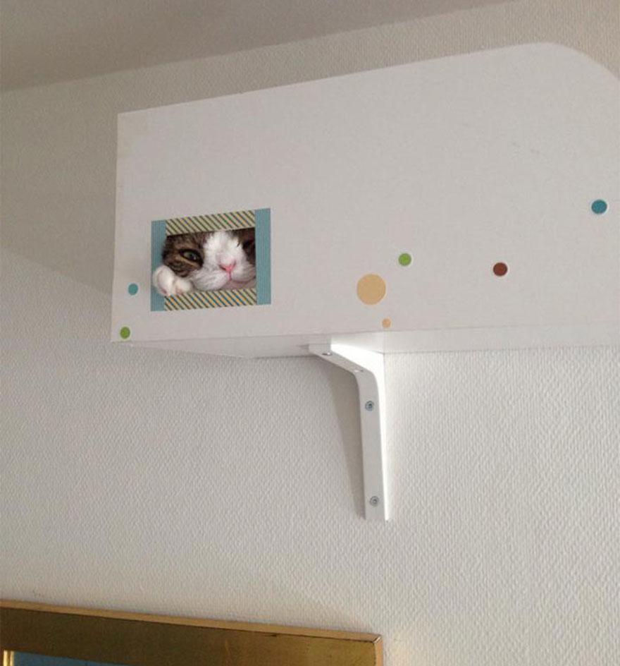 天生無鼻樑的貓4