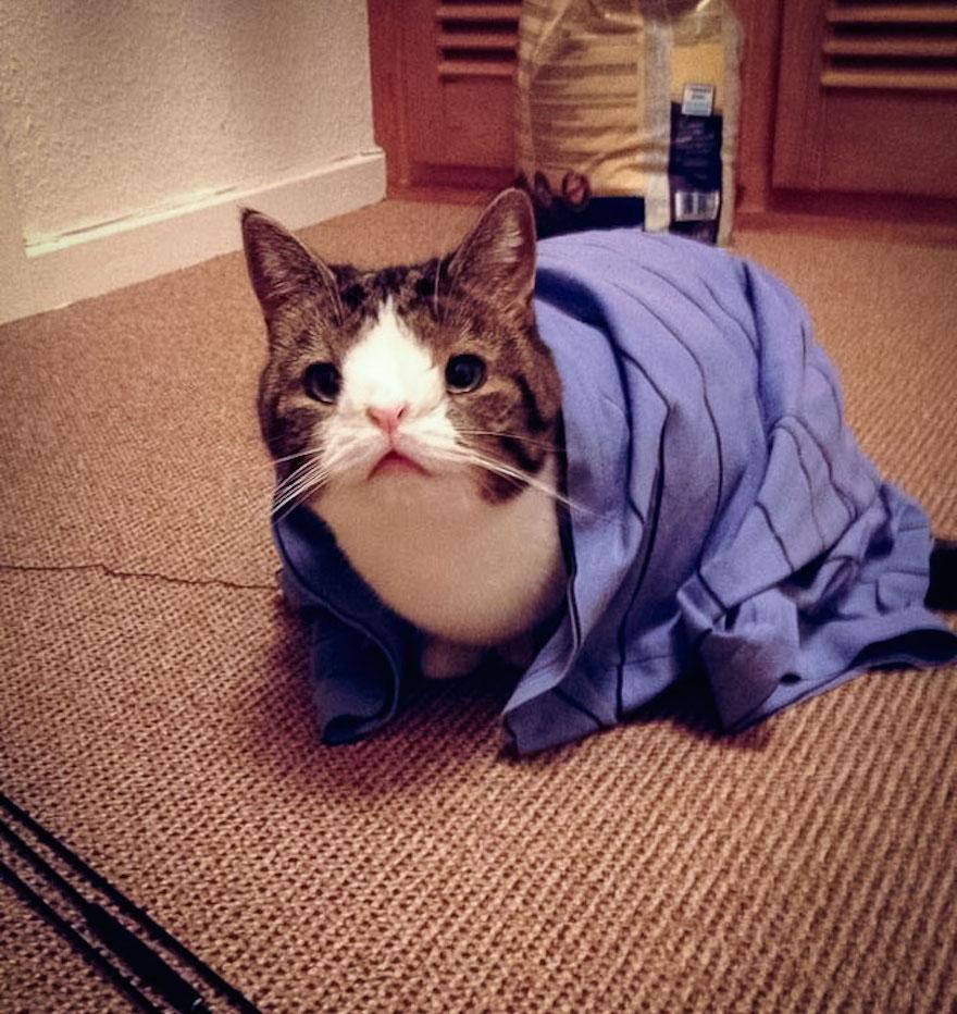 天生無鼻樑的貓3