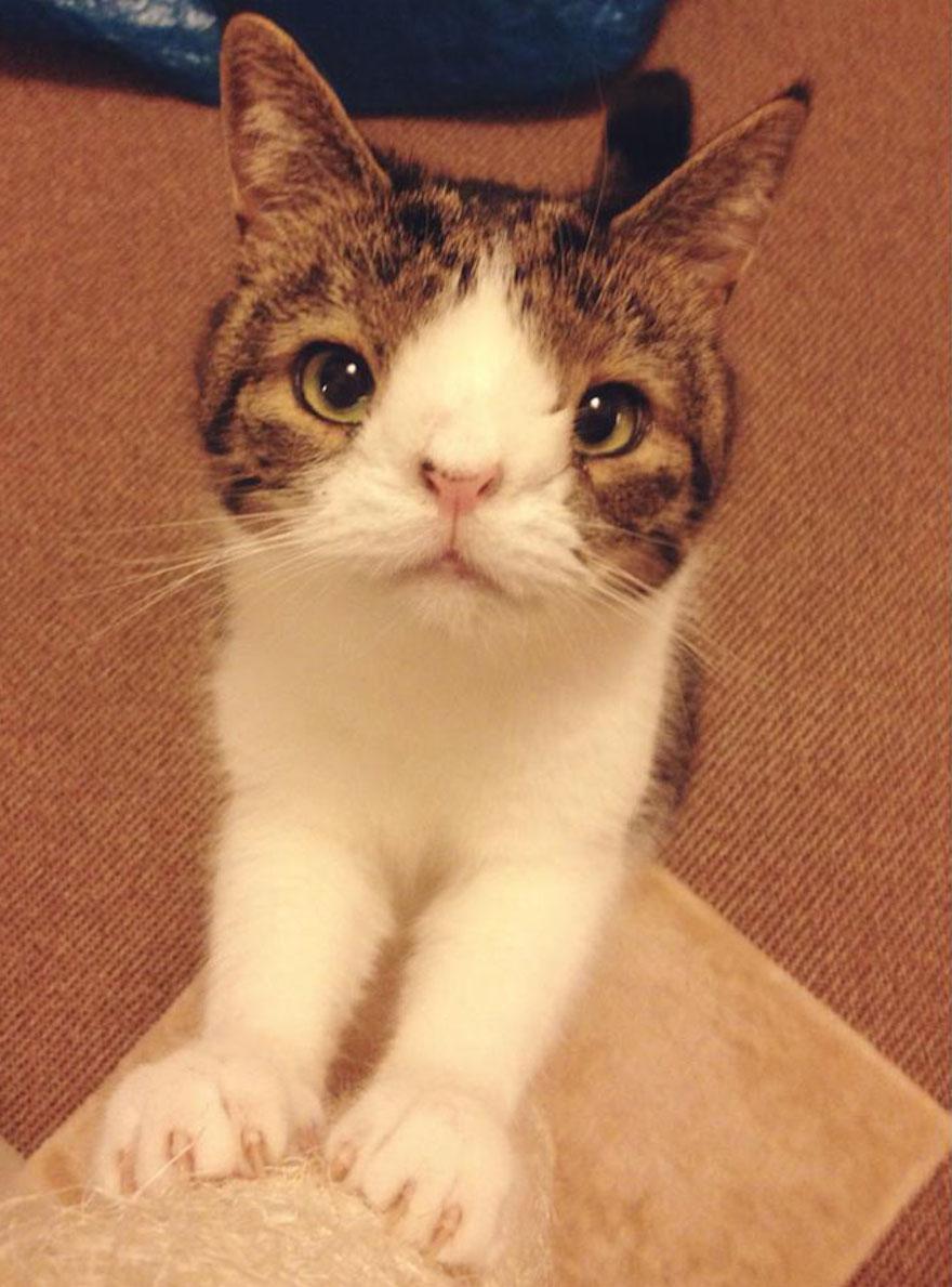 天生無鼻樑的貓12