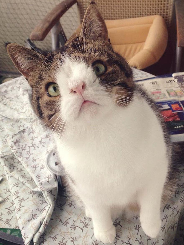 天生無鼻樑的貓10