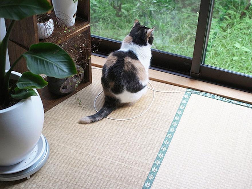 捕捉貓咪的陷阱6