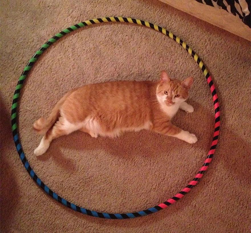 捕捉貓咪的陷阱5