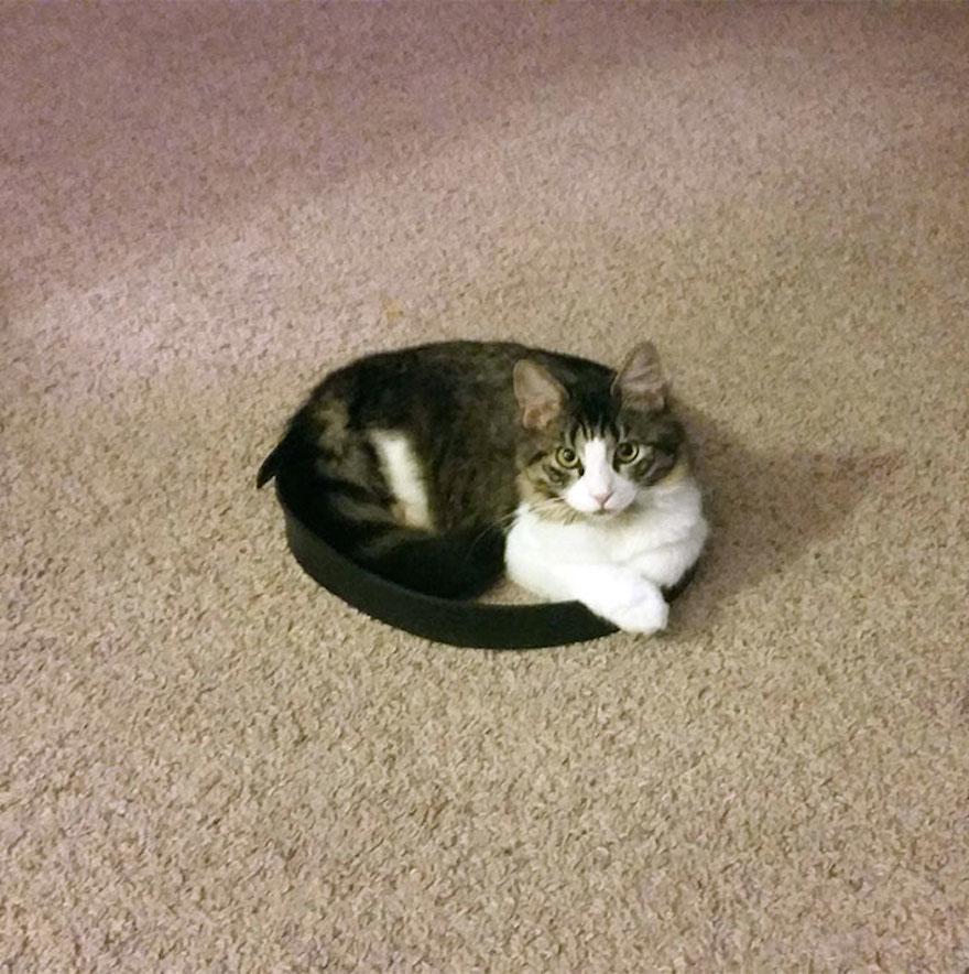 捕捉貓咪的陷阱4