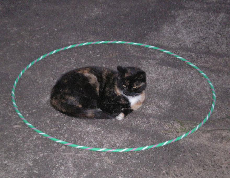 捕捉貓咪的陷阱3