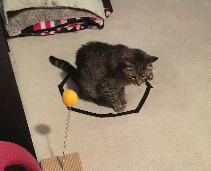 捕捉貓咪的陷阱1