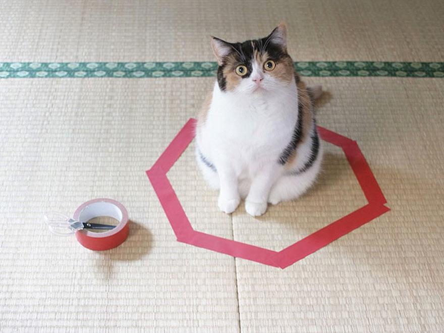 捕捉貓咪的陷阱11