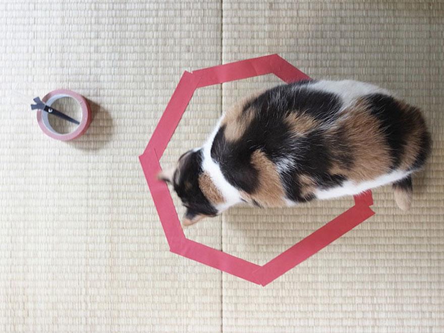 捕捉貓咪的陷阱12