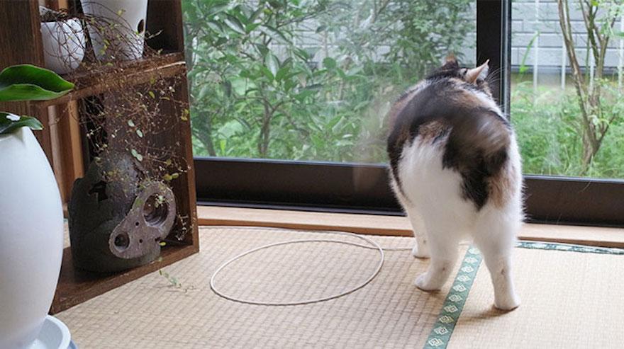 捕捉貓咪的陷阱9