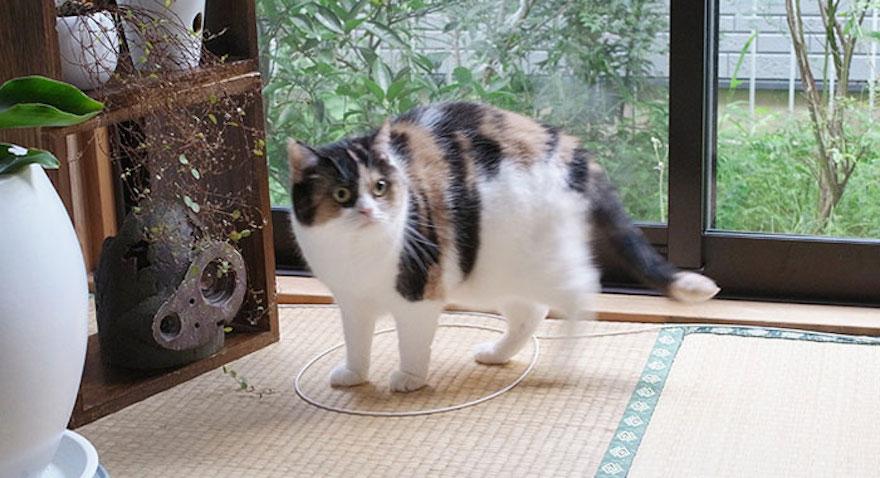 捕捉貓咪的陷阱8