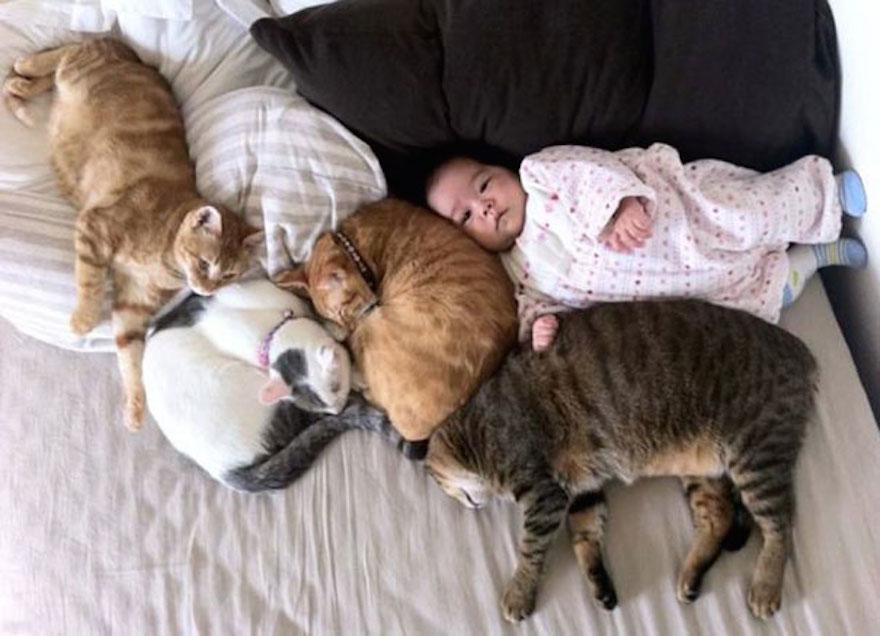 貓與小孩9