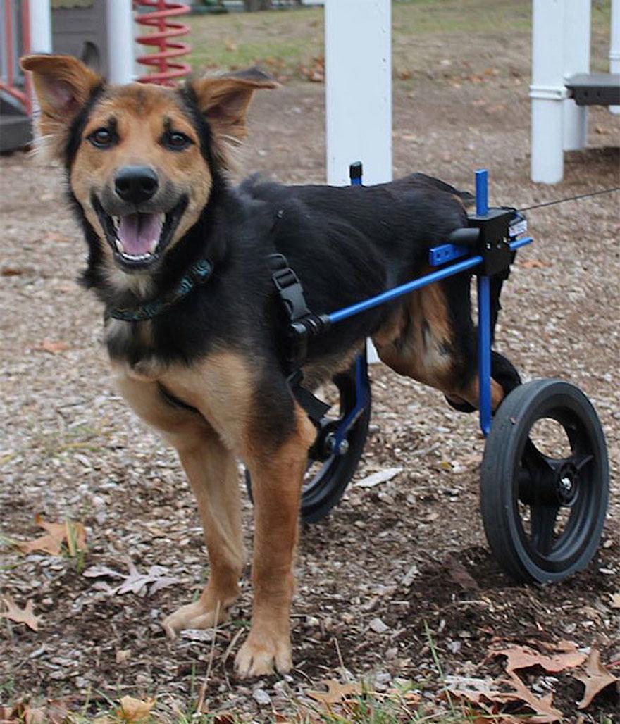癱瘓的狗8