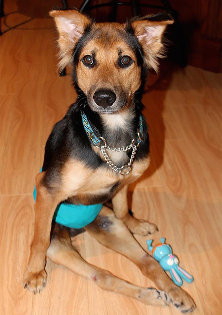 癱瘓的狗6