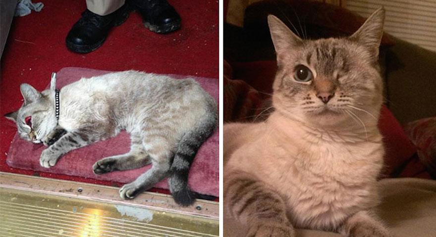 貓的重生照3