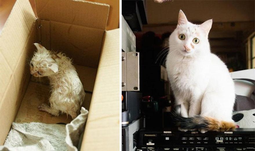 貓的重生照2