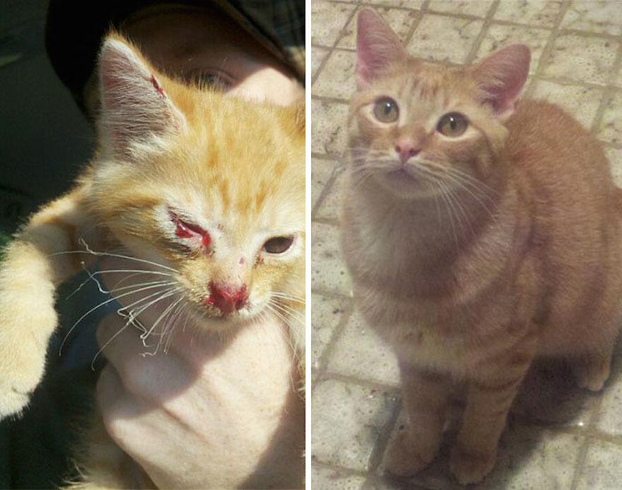 貓的重生照15