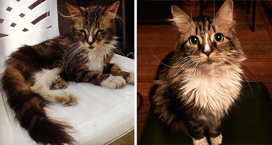 貓的重生照9