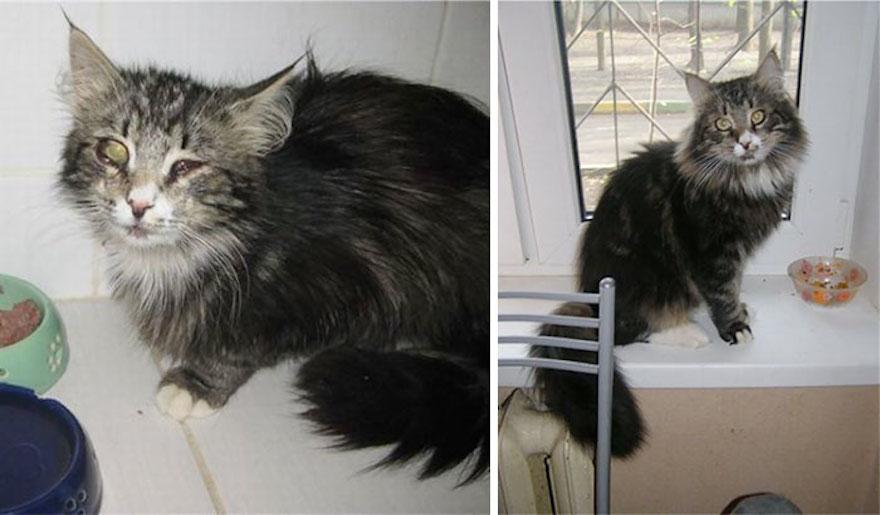 貓的重生照8