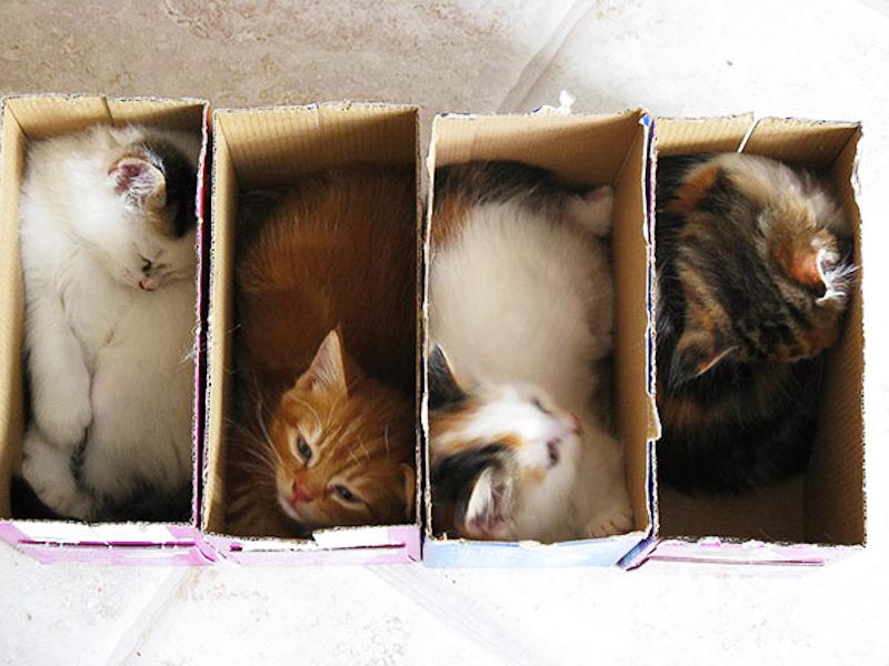 擠在小空間的貓10