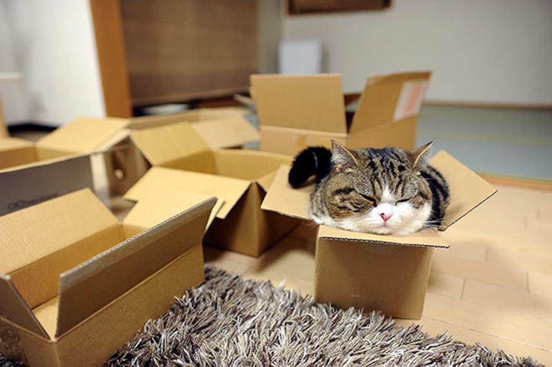 擠在小空間的貓16